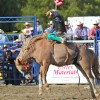 Isaac Diaz competes in the saddle bronc-riding event during last year's Rancho Mission Viejo Rodeo. Photo: Brian Park
