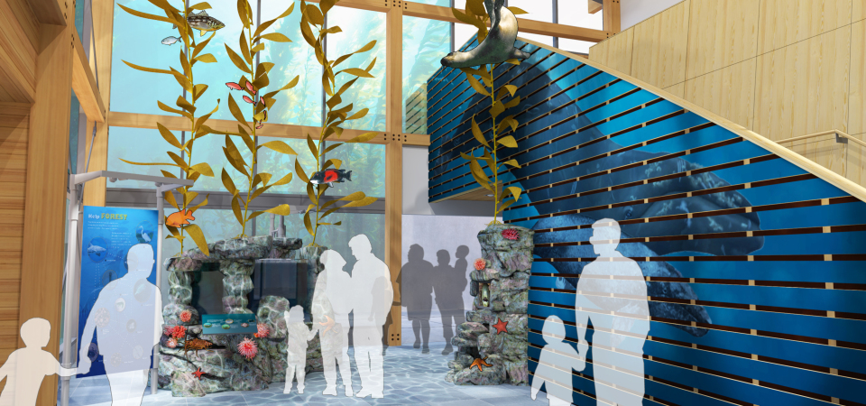 The lobby area at the Ocean Institute will be transformed into the  Draper Family Foundation Kelp Forest as part of the Phase 2 expansion. Rendering: Courtesy Ocean Institute