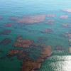 A section of the Wheeler North Reef as viewed from above in 2010, before the kelp was fully filled in. Photo: Andrea Swayne
