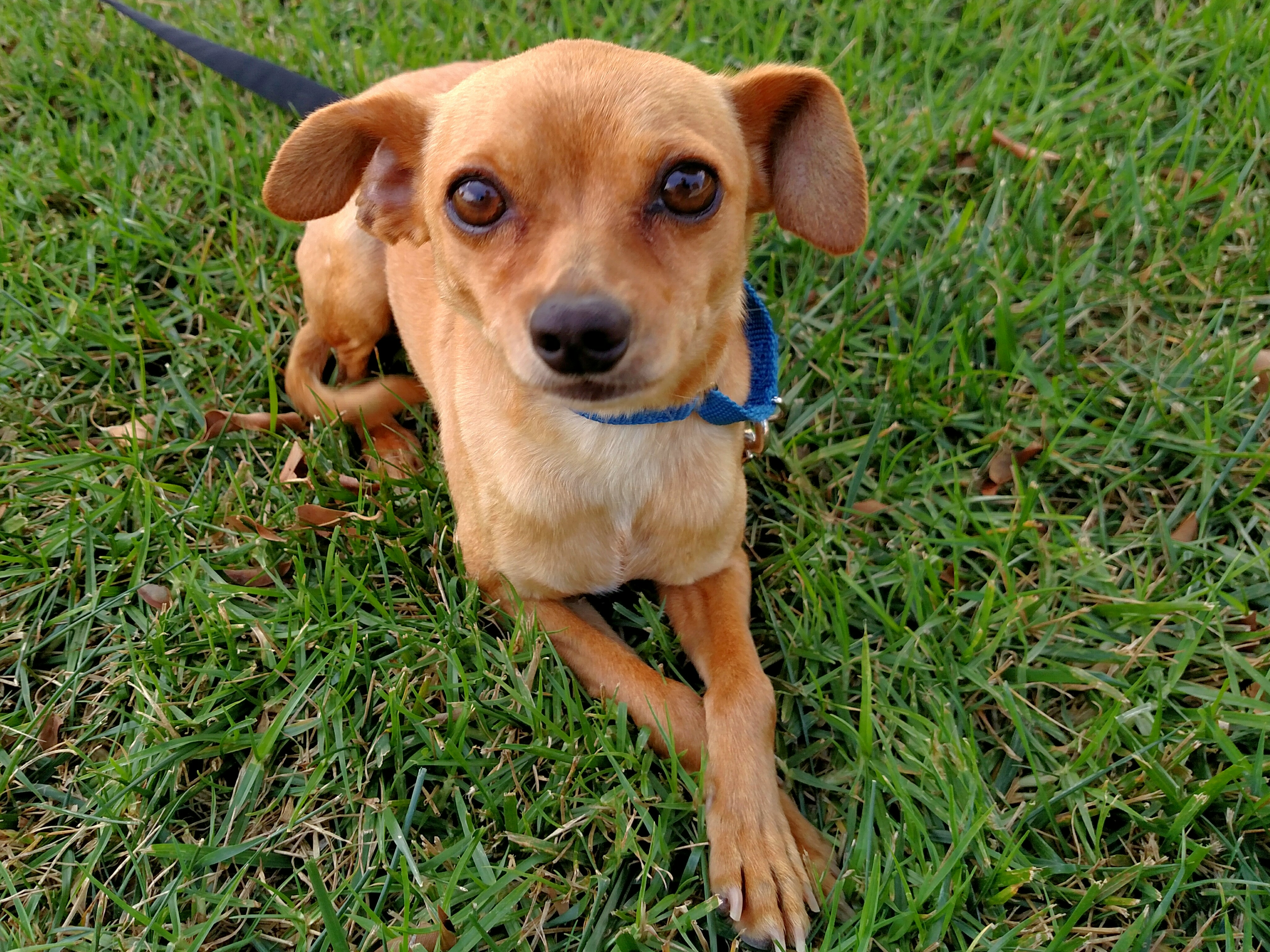 Pet Of The Week Chase Dana Point Times