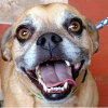 Brinkley. Photo: Courtesy of the San Clemente-Dana Point Animal Shelter