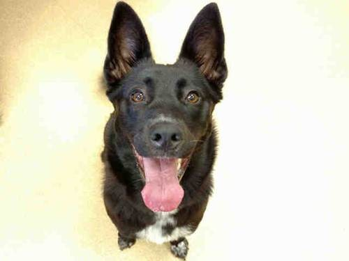 Zoey. Photo: Courtesy of the San Clemente-Dana Point Animal Shelter