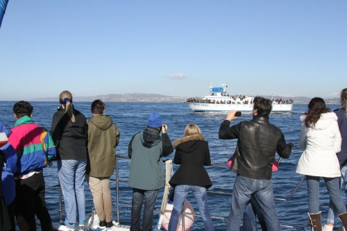 Dana Hills High School students and teachers aboard Capt. Dave's Dolphin & Whale Safari boat Manute'a,  take a shot of the second boat on the Jan. 8 Festival of Whales field trip, Dana Wharf's vessel, Dana Pride. Photo: Andrea Swayne