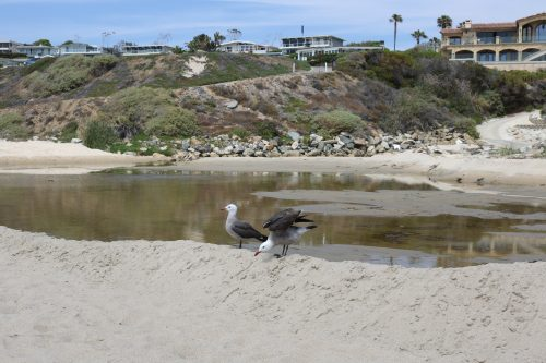 Monarch Beach received poor grades for its water quality, due in part to environmental contamination at its runoff point. Photo: Matt Cortina
