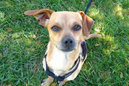 Esteban is available at the San Clemente/Dana Point Animal Shelter.