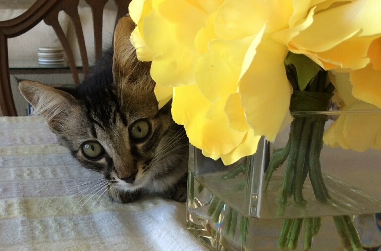 Camry. Photo: Courtesy of the San Clemente/Dana Point Animal Shelter
