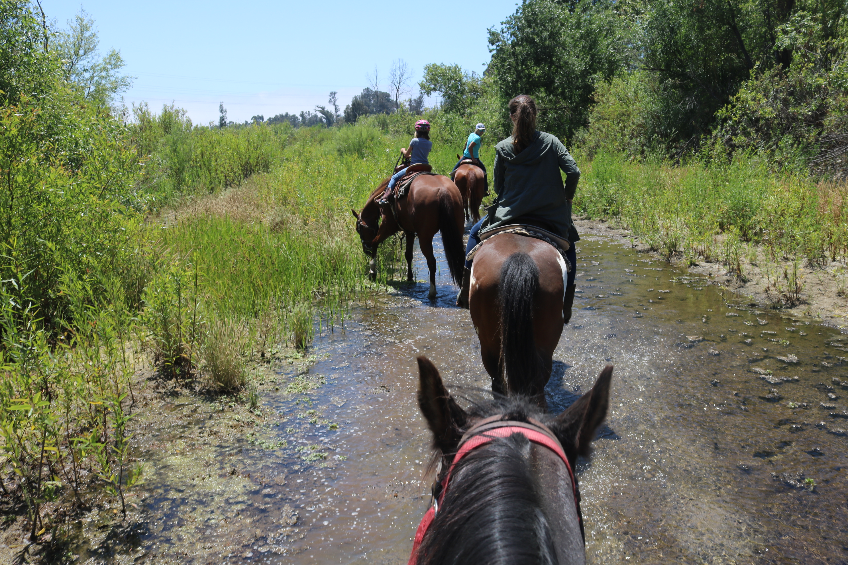 Trails And Tails Ortega Equestrian Center Brings Horse
