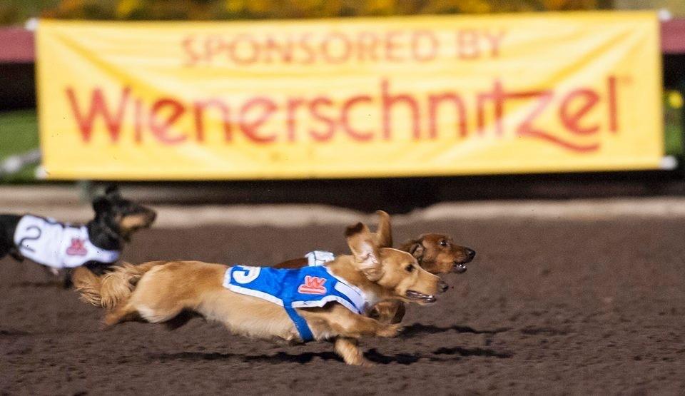 Wiener Dog 3